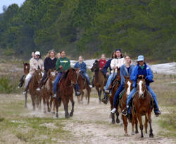 Horseback riders loping in the Florida Scrub