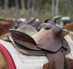 Horse Saddled and Ready for a Trail Ride - Western Saddle